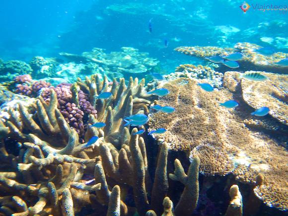Mergulho em Samoa