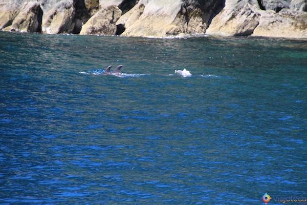 Golfinhos Milford Sound