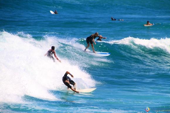 Muriwai Beach e Gansos Patola em Auckland 009