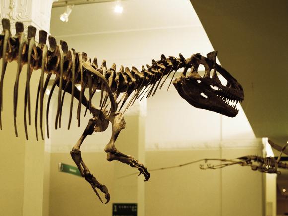 Museu de Auckland na Nova Zelândia