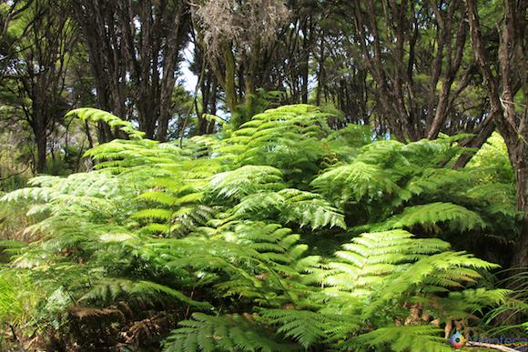 Paisagem dominada por samambaias na trilhe pelo Abel Tasman National Park na Nova Zelândia