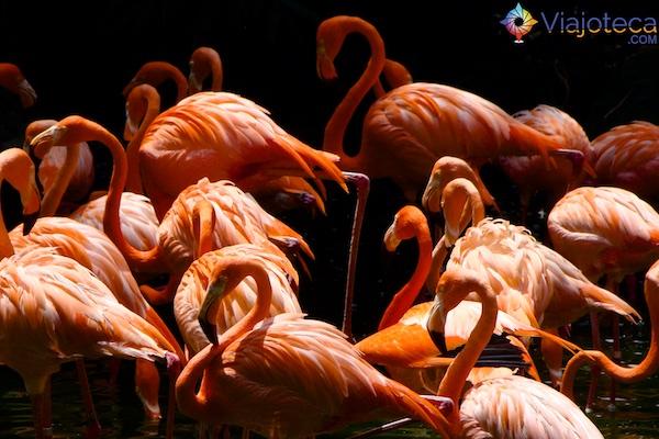 Flamingos no Parque das Aves Singapura - Jurong Bird Park