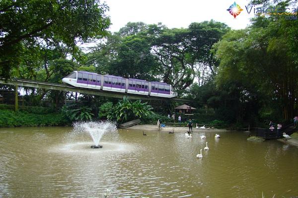 parque-das-aves-em-singapura-jurong-bird-park-2