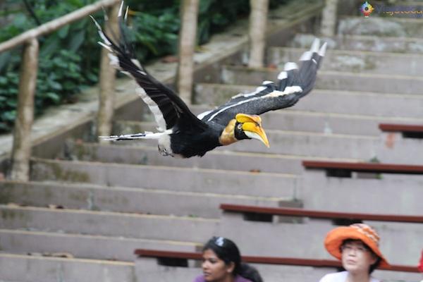 Show no Parque das Aves Singapura - Jurong Bird Park