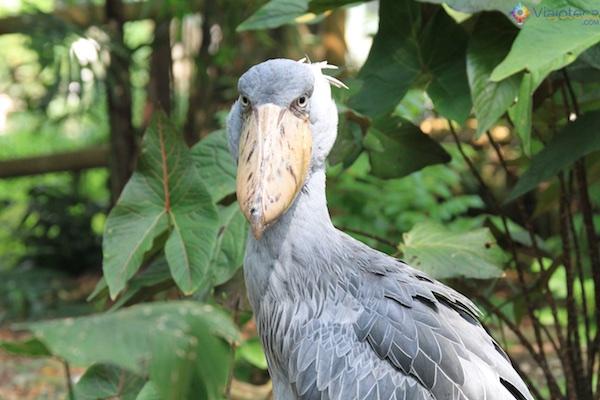 parque-das-aves-em-singapura-jurong-bird-park-93
