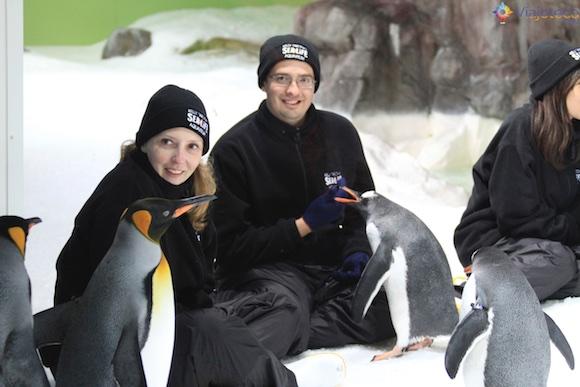 Penguins no Aquário de Auckland