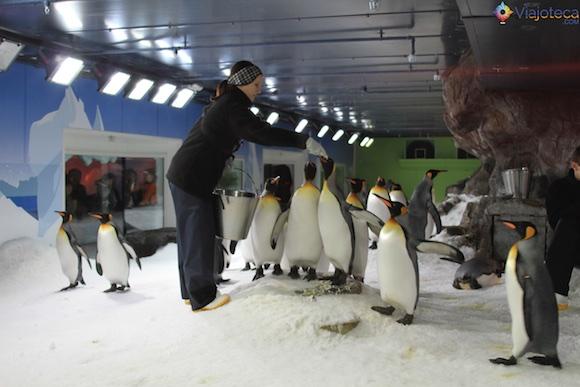 Penguins no Aquário de Auckland (15)