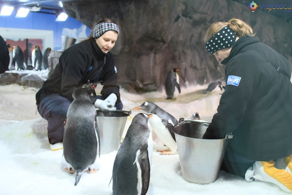 Penguins no Aquário de Auckland (17)