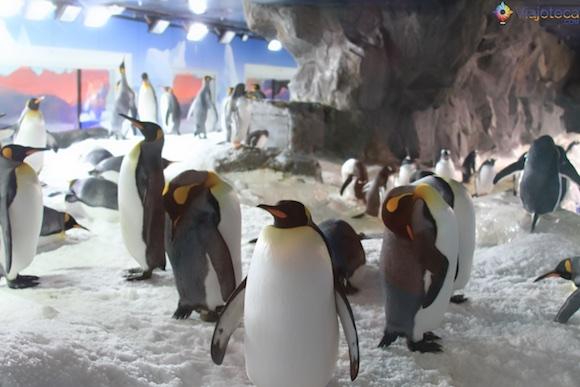 Penguins no Aquário de Auckland (3)