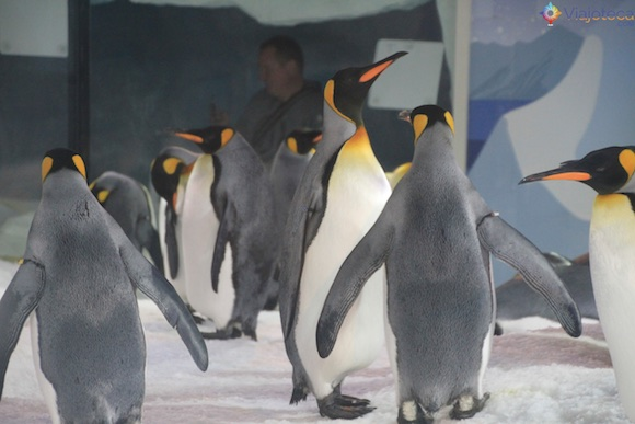 Penguins no Aquário de Auckland (30)