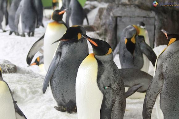 Penguins no Aquário de Auckland (6)