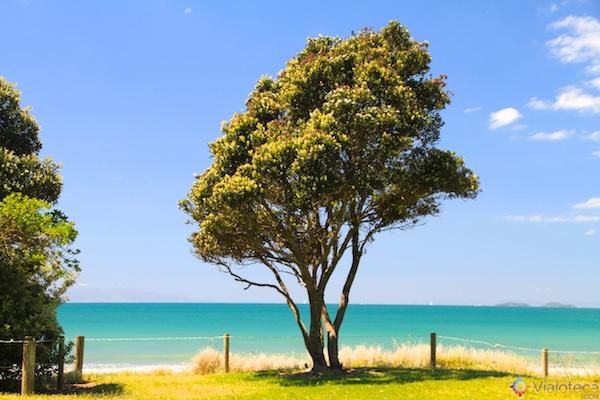 Praias North Shore Auckland - Long Bay 4