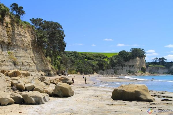 Praias North Shore Auckland - Long Bay 5