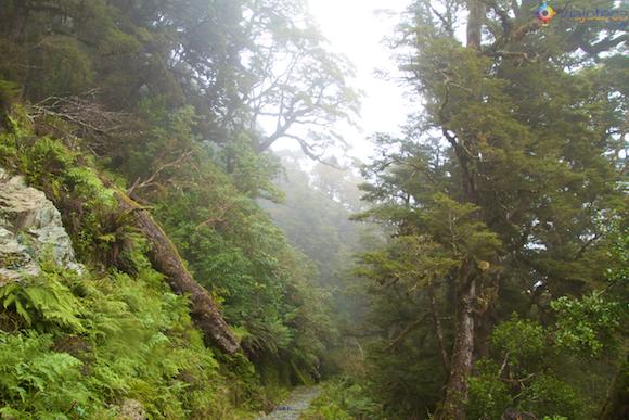 Routeburn Track Nova Zelândia (13)
