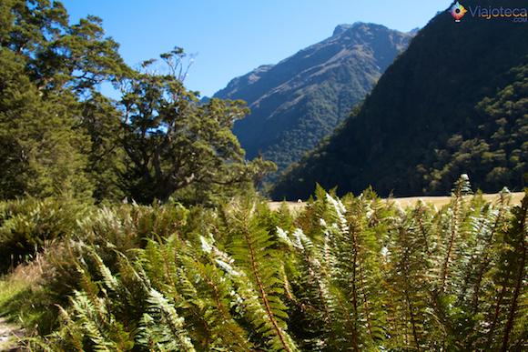 Routeburn Track Nova Zelândia (38)