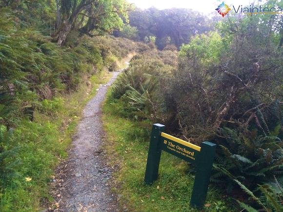 The Orchard na Routeburn Track Nova Zelândia (47)