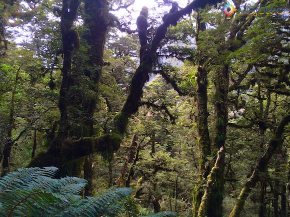 Routeburn Track Nova Zelândia (56)