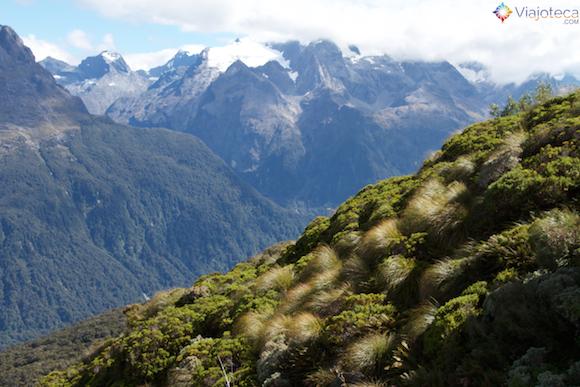 Vegetação alto-montada na Routeburn Track na Nova Zelândia