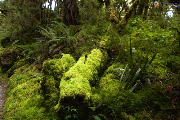 Routeburn Track Nova Zelândia (8)