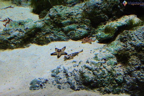 Aquario em Singapura