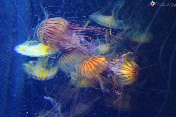 sea-aquarium-em-singapura-335