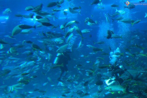 sea-aquarium-em-singapura-340