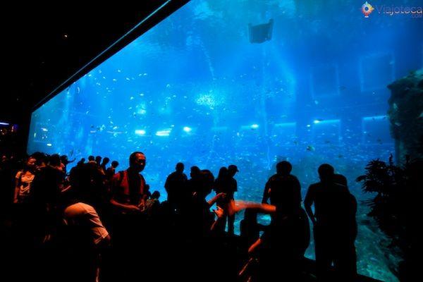 sea-aquarium-em-singapura-345