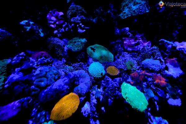 corais que brilham no escuro Aquario em Singapura