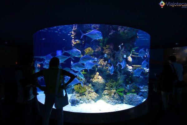 sea-aquarium-em-singapura-352