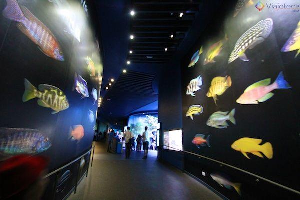 sea-aquarium-em-singapura-353