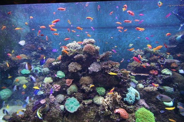 sea-aquarium-em-singapura-356