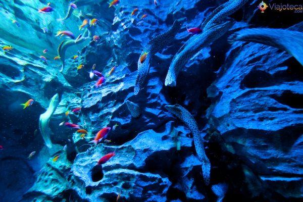 sea-aquarium-em-singapura-361