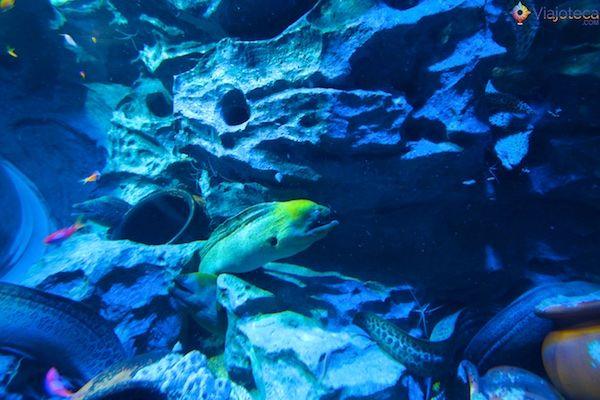 sea-aquarium-em-singapura-362