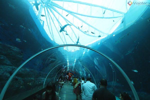 sea-aquarium-em-singapura-363