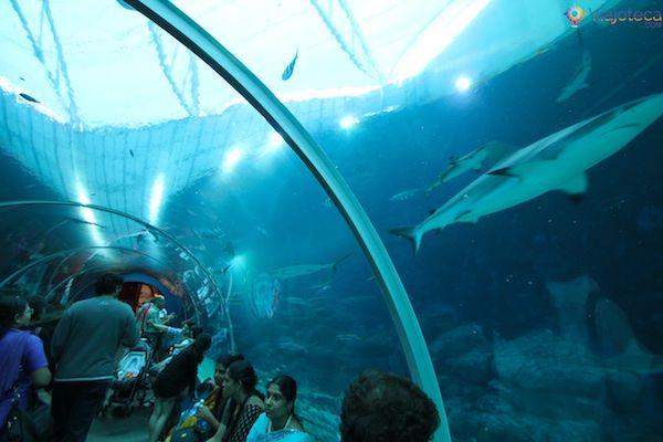 sea-aquarium-em-singapura-365