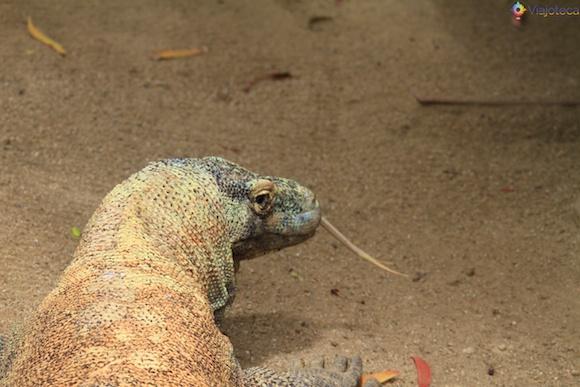 Taronga Zoo - Zoologico de Sydney 25
