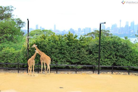 Taronga Zoo - Zoologico de Sydney 26