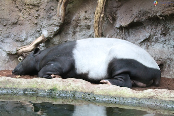 Taronga Zoo - Zoologico de Sydney 58