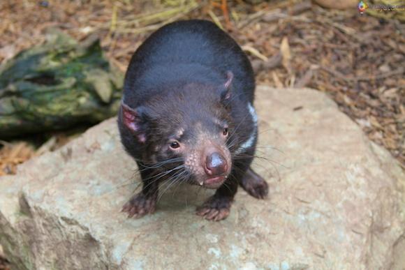 Taronga Zoo - Zoologico de Sydney 70