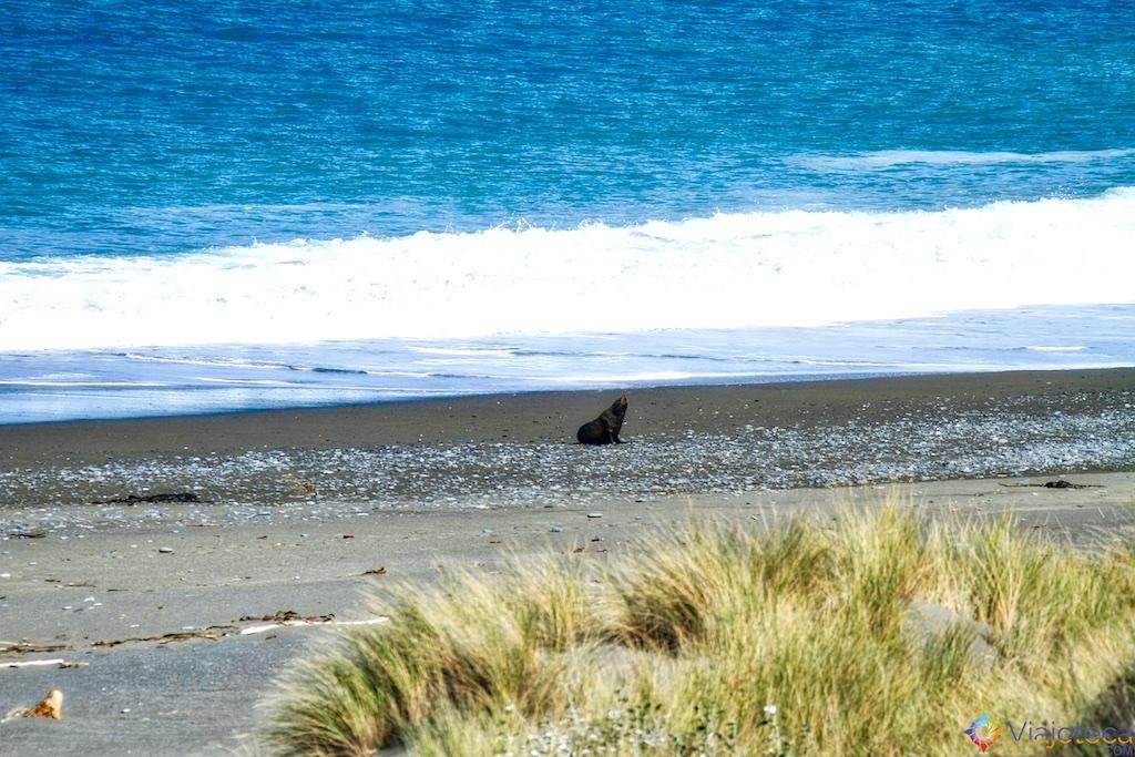 Viagem Trem Nova Zelândia - Coastal Pacific 101