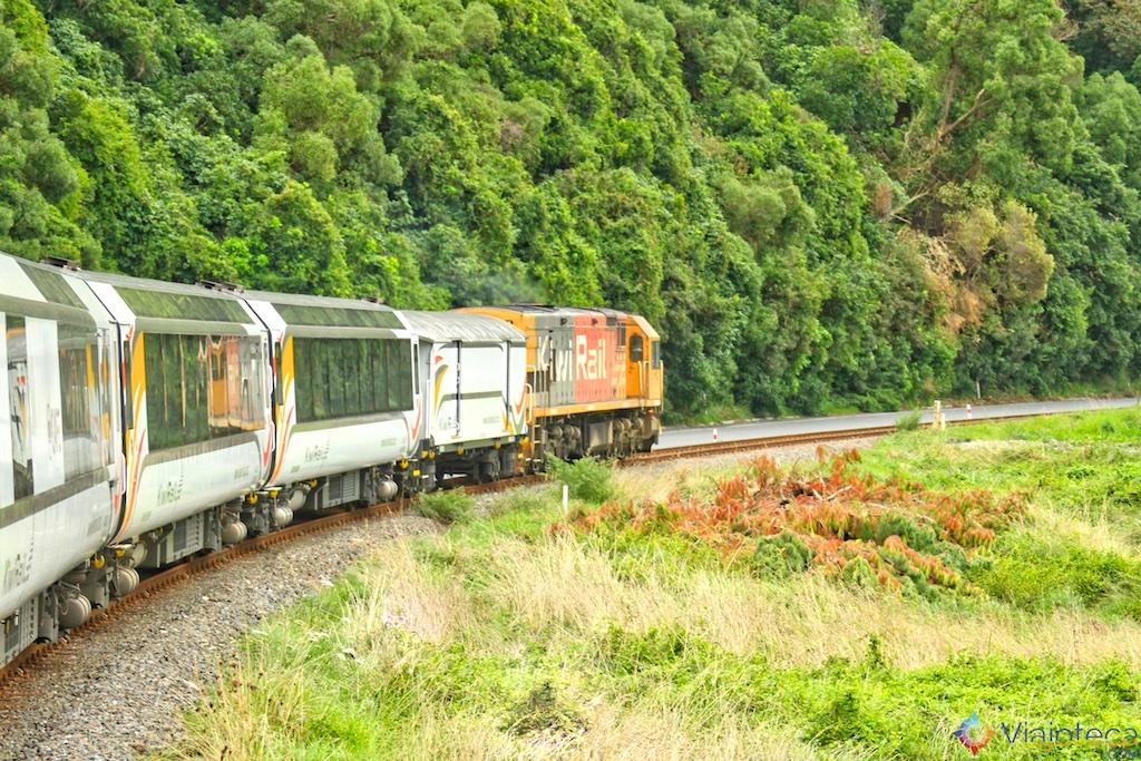 Viagem Trem Nova Zelândia - Coastal Pacific 25