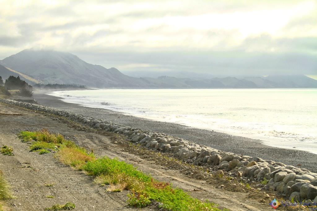 Viagem Trem Nova Zelândia - Coastal Pacific 40