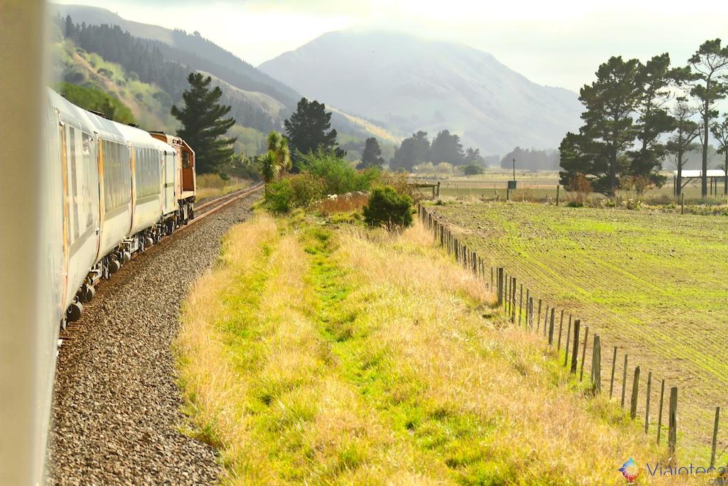 Viagem Trem Nova Zelândia - Coastal Pacific 41