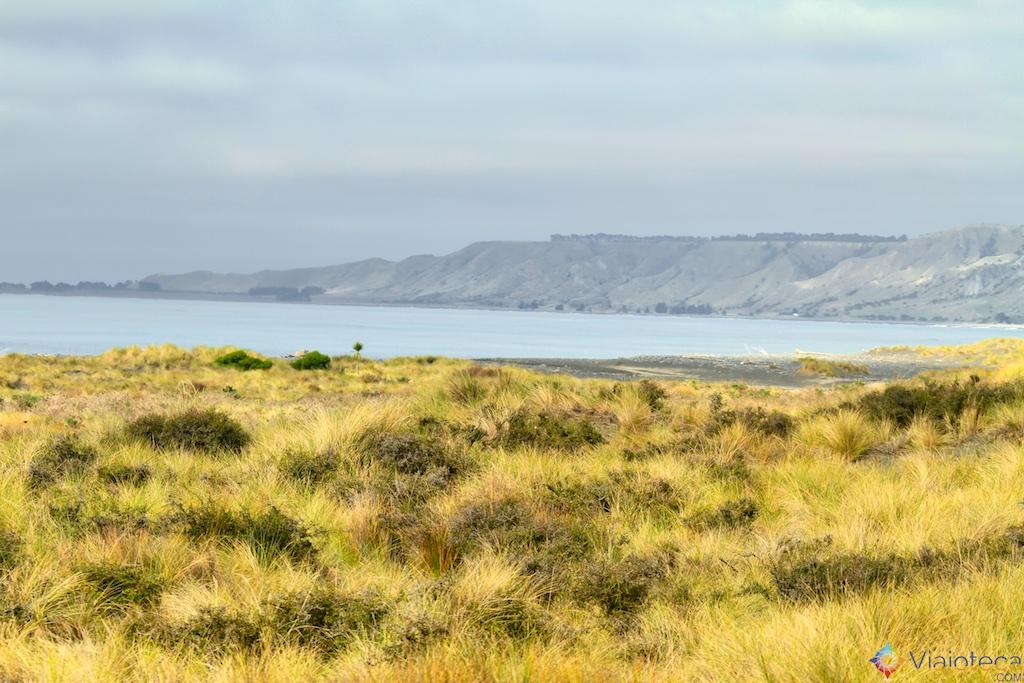 Viagem Trem Nova Zelândia - Coastal Pacific 42