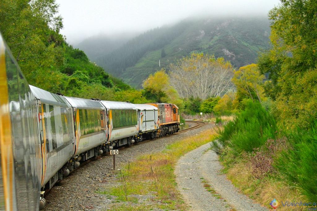 Viagem Trem Nova Zelândia - Coastal Pacific 5