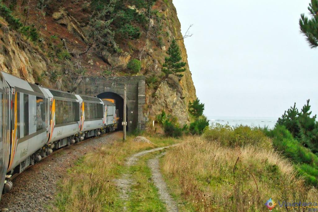 Viagem Trem Nova Zelândia - Coastal Pacific 6