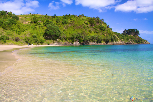 Vinhos Nova Zelândia - Waiheke Island - PAlm Beach