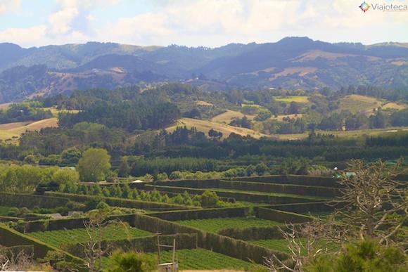 Vinicolas em Auckland- Matakana Wine Trail 10