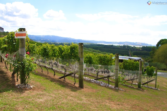Vinicolas em Auckland- Matakana Wine Trail 13
