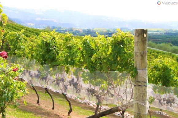 Vinicolas em Auckland- Matakana Wine Trail 14